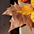 Leaves yellow and brown with pumpkins — Stock Photo