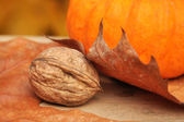 A nut under a leaf — Stock Photo
