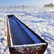 Trough filled with frozen water — Stock Photo