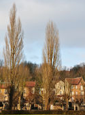 Group of houses behind tall poplars — Stock Photo