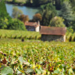 Champagne vineyards — Foto Stock