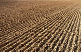 Furrows in a field — Stock Photo