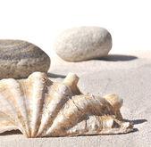 Seashell and pebbles on sand — Stock Photo