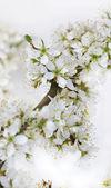 Flowers on twig — Stock Photo