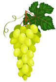Cluster of dark green grapes. — Stock Vector