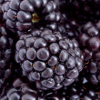 zoete blackberry — Stockfoto