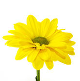 Yellow flowers — Stockfoto