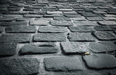 Stone block pavement — Stock Photo
