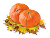 Two pumpkins — Stock Photo