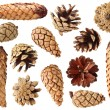 Fir and pine cones — Stock Photo #4237521