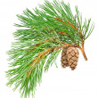 Pine branch — Stock Photo #4287996