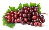 Purple grape — Stock Photo