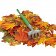 colorful fall leaves with rake — Stock Photo