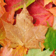 View From Above of a Colorful Maple Leaves — Stock Photo