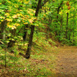 Stock Photo: Trail Through Woods