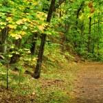 un sendero por el bosque — Foto de Stock