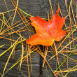 Close-up of a Red and Orange Maple Leaf — Stock Photo #5227561