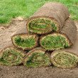 Stock Photo: Stack of Sod Rolls
