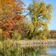 Autumn Pond Scene - Stock Photo