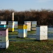 Multi-Colored Langstroth Bee Hives - Stock Photo