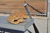 野球のバットやグローブ — ストック写真