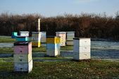 Multi-Colored Langstroth Bee Hives — Stock Photo
