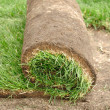 Stock Photo: Sod Roll