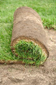 Sod Roll — Stock Photo