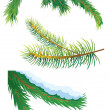 图库照片: Fir tree branches