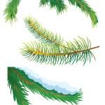枞树枝 — 图库照片