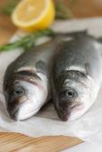 Fresh sea bass — Stock Photo
