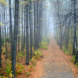 Fog in a wood — Stock Photo #4661467