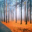 Stock Photo: Fog in wood