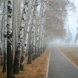 Stock Photo: Fog in a wood