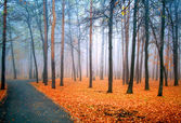 Fog in a wood — Stock Photo