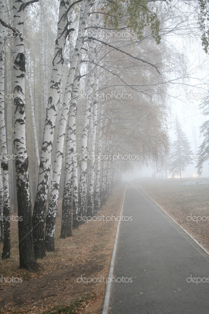 Heavy fog in a birch wood — Stock Photo #5358717