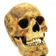 Skull of Caucasian — Stock Photo