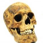 cráneo de caucásico — Foto de Stock