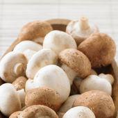 Field mushroom — Stock Photo