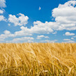Agriculture landscape — Stock Photo #5223223