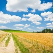 Agriculture landscape — Stock Photo