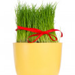 Easter grass — Stock Photo