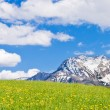 Alpine landscape — Stock Photo #5223589