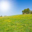 Stock Photo: Grassland in springtime