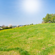 Grassland in the springtime — Stock Photo
