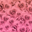 Heart shaped rose background — Stock Photo