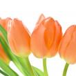 Orange tulips — Stock Photo #5229760
