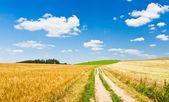 Agriculture landscape — Stock Photo