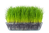 Grass with soil — Stock Photo