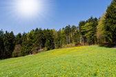 Spring meadow — Stock Photo